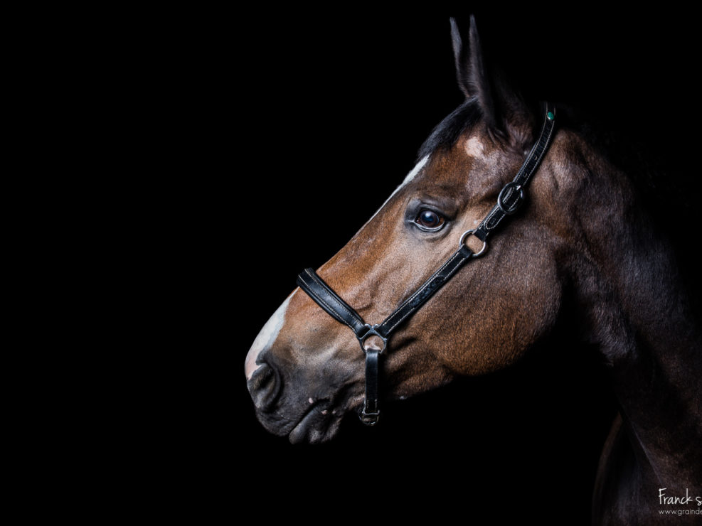 studio-equestre-etrier-charentais-franck-simon-grain-de-pixel-phototgraphe-equestre