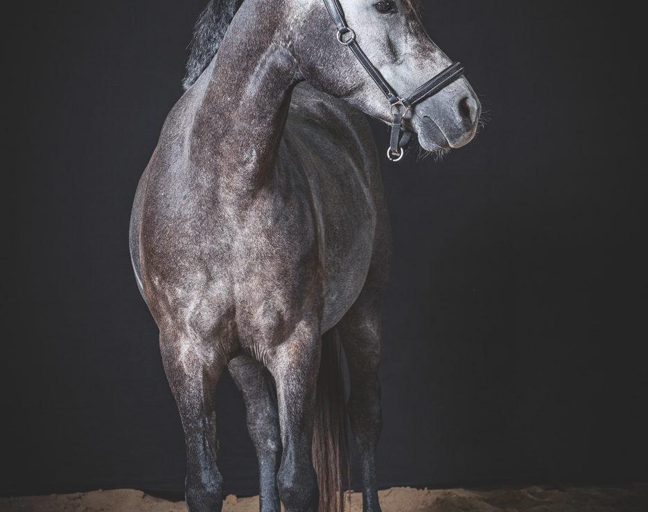 studio-equestre-etrier-charentais-franck-simon-grain-de-pixel-phototgraphe-equestre-11