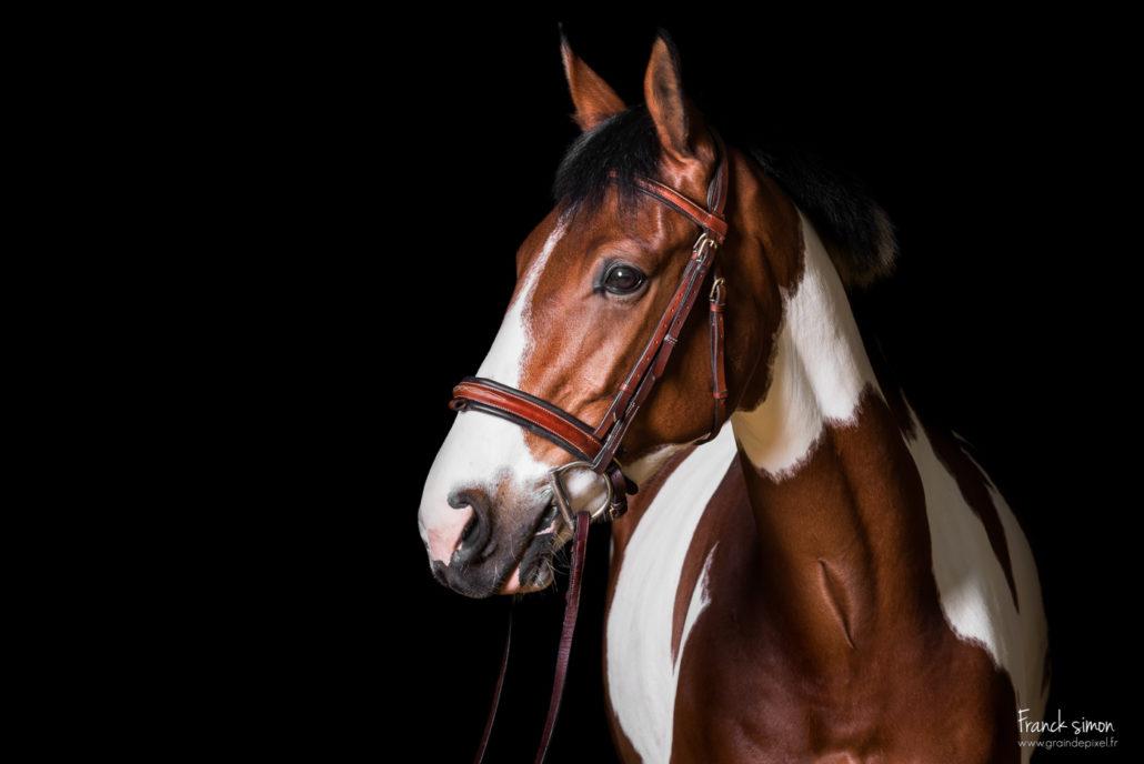studio-equestre-etrier-charentais-franck-simon-grain-de-pixel-phototgraphe-equestre-5