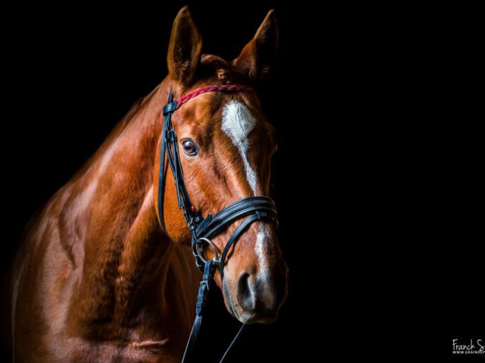studio-equestre-grain-de-pixel-photographe-equestre-animalier-1