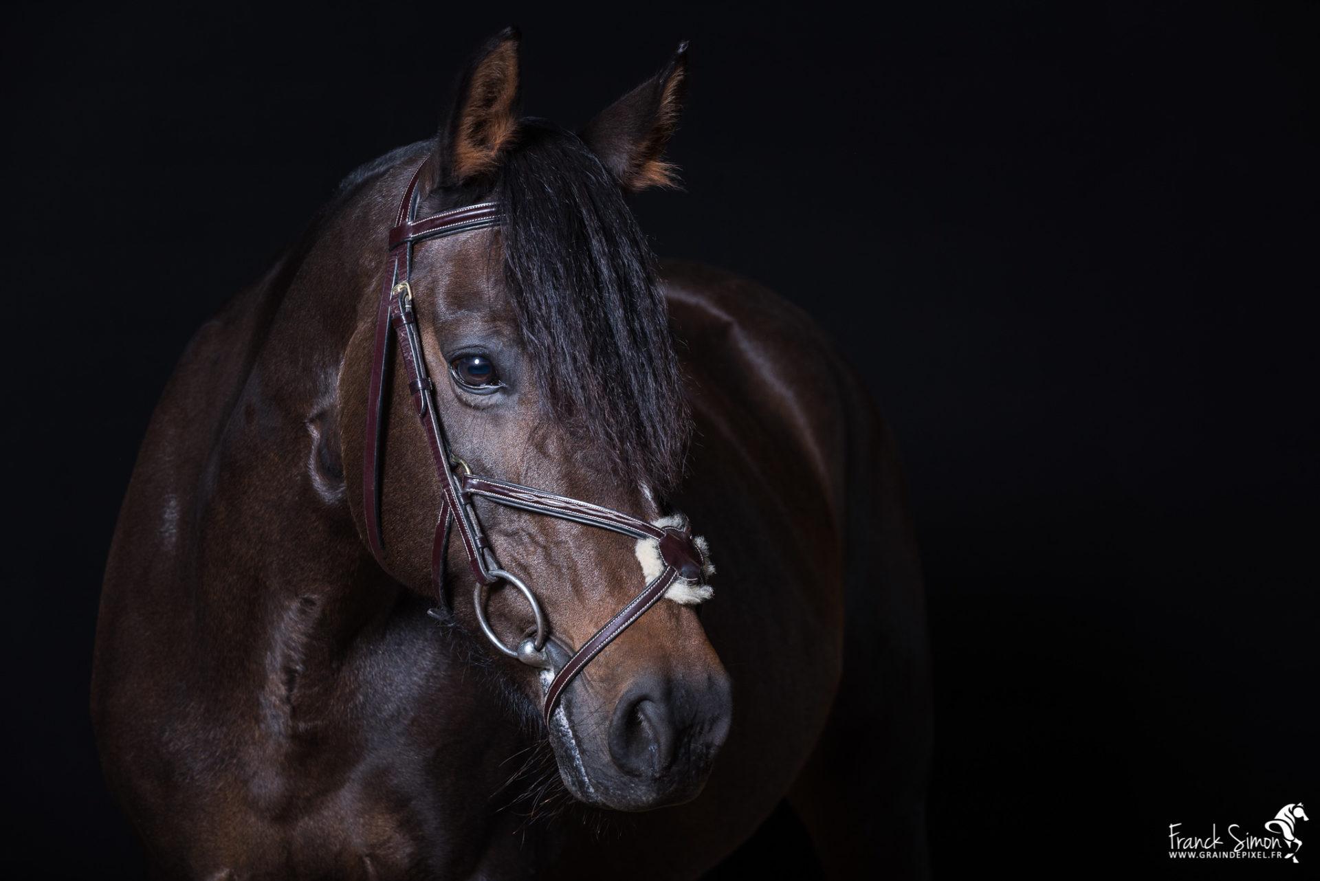 Studio équestre, le cheval sublimé