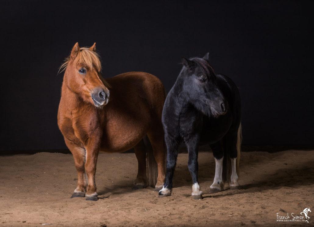 photographie-studio-grain-de-pixel-photographe-équestre-animalier-1