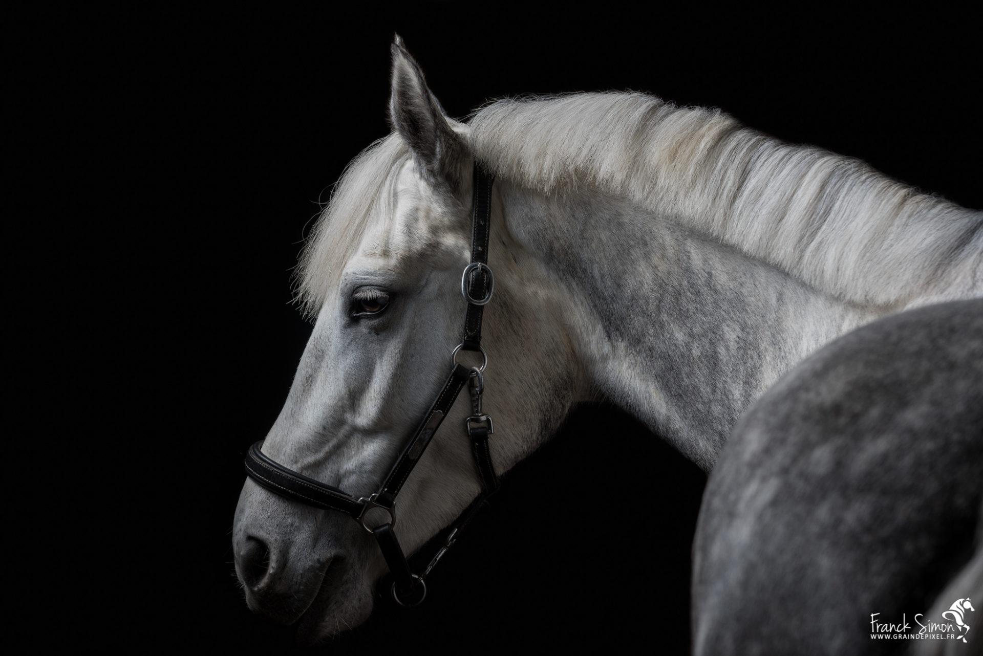 Studio et chevaux, les premiers pas