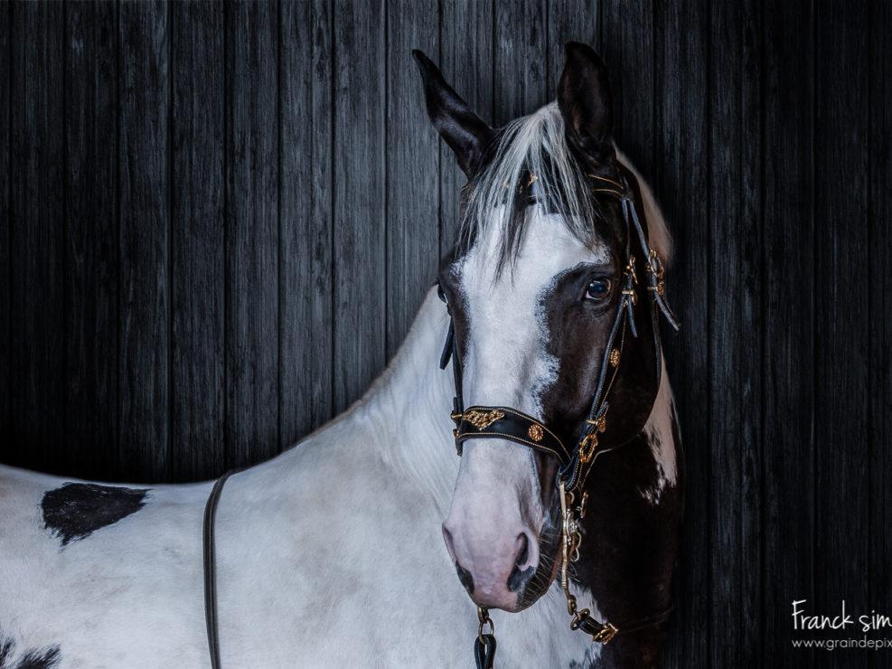 vortex-studio-grain-de-pixel-photographe-equestre