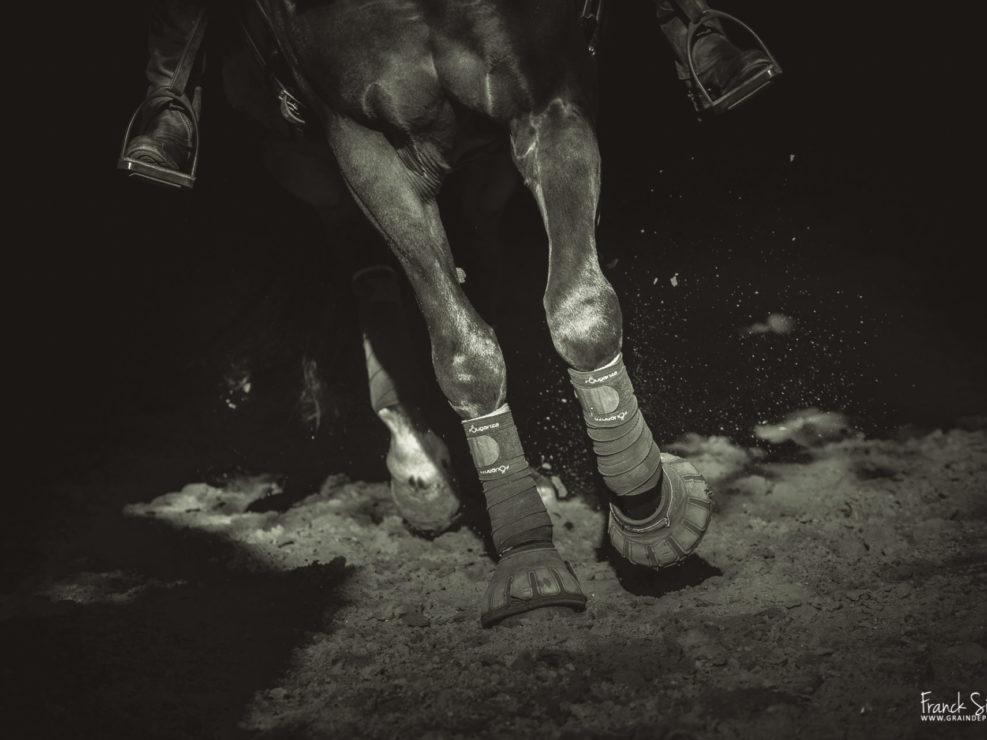 danse-lumière-cheval-bavard-grain-de-pixel-photographe-equestre-et-animalier-1