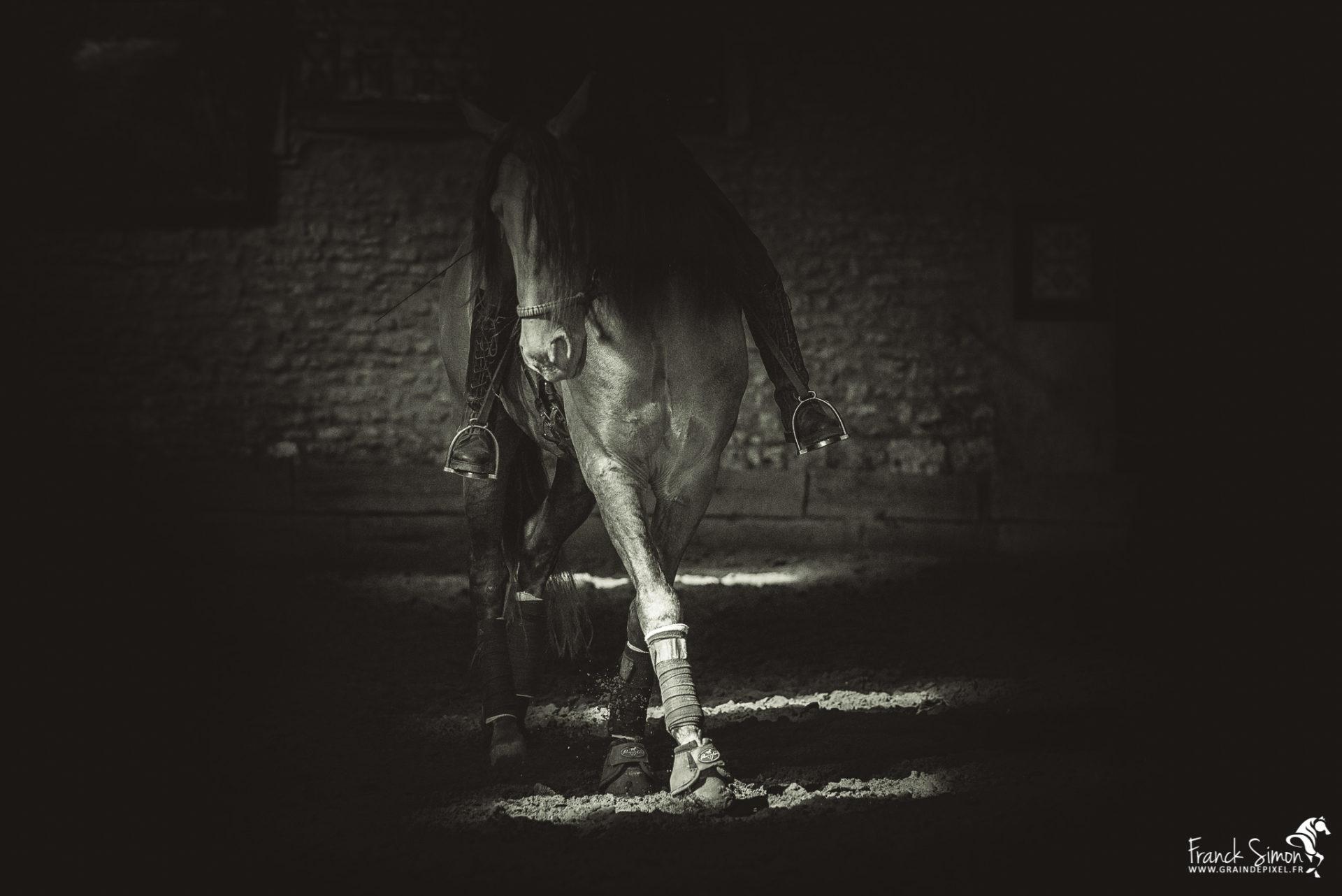 Photographier le cheval en manège couvert : surmonter les difficultés