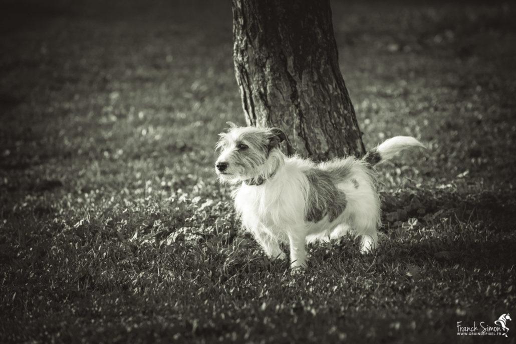 uggy-chien-grain-de-pixel-photographe-equestre-animalier-2