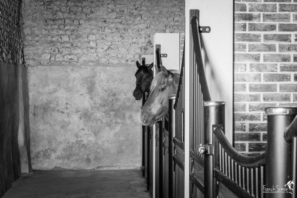 installation-equestre-franck-simon-grain-de-pixel-photographe-equestre-2