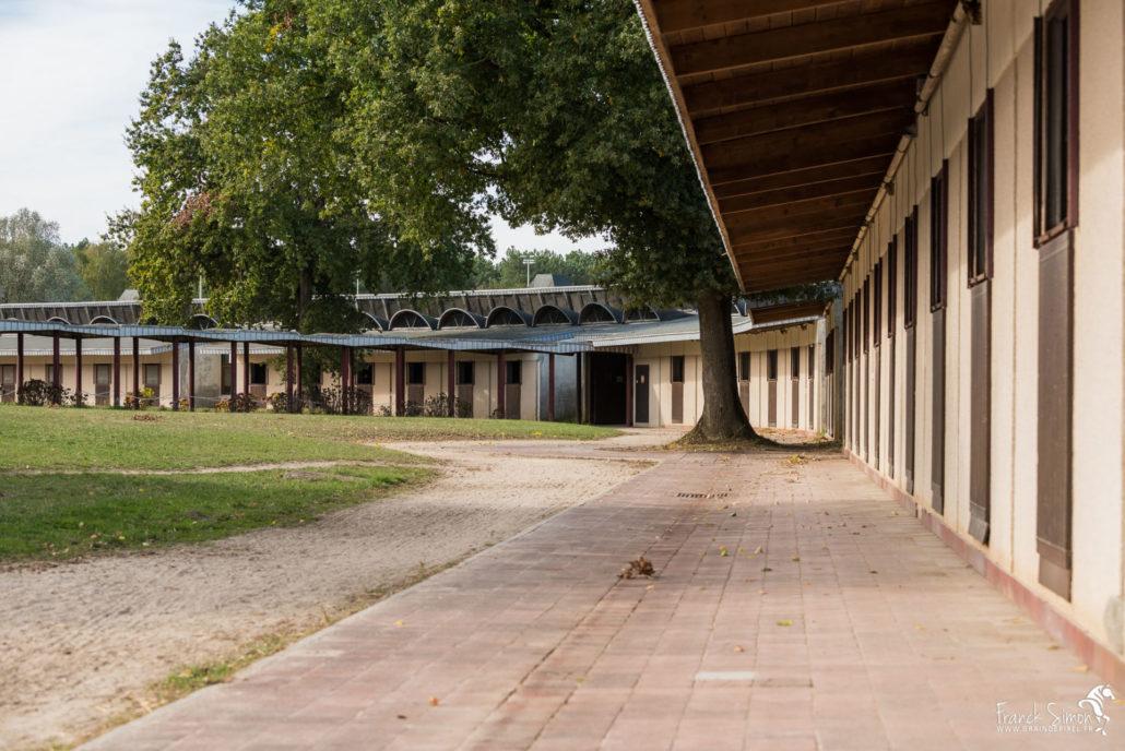 structure-équestre-écurie-ene-saumur-franck-simon-graindepixe.fr-photographe-équestre-animalier-38