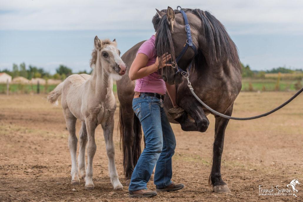 minh-tam-franck-veterinaire-osteopathe-franck-simon-grain-de-pixel-photographe-equestre