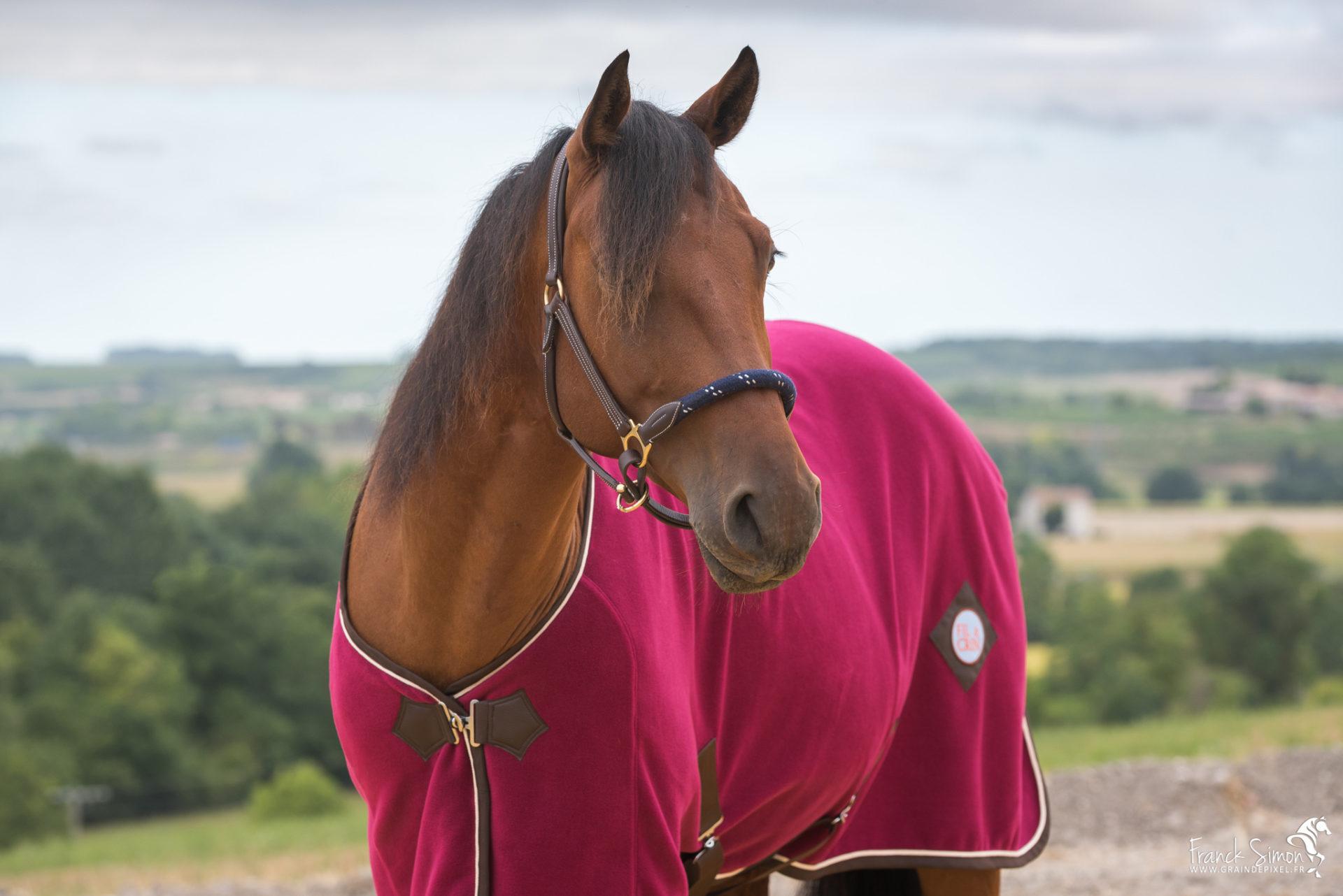 Fil&Crins, couvertures pour chevaux