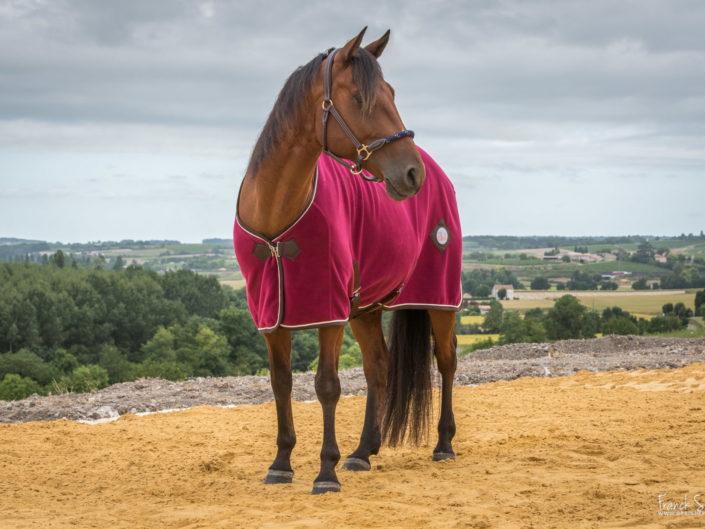 fil-et-crin-couverture-box-grain-de-pixel-photographe-equestre-animalier