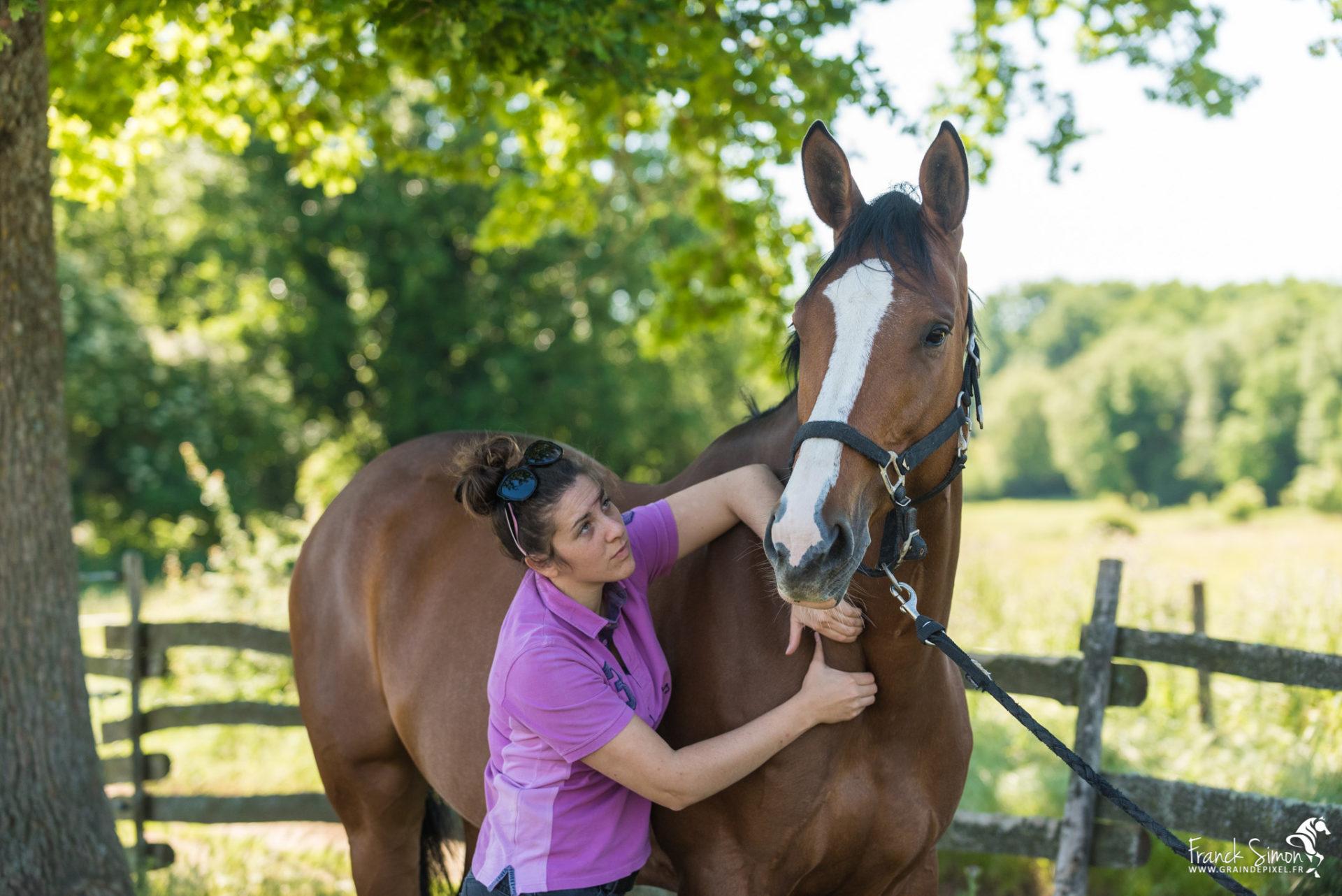 Physiothérapeuthe équin