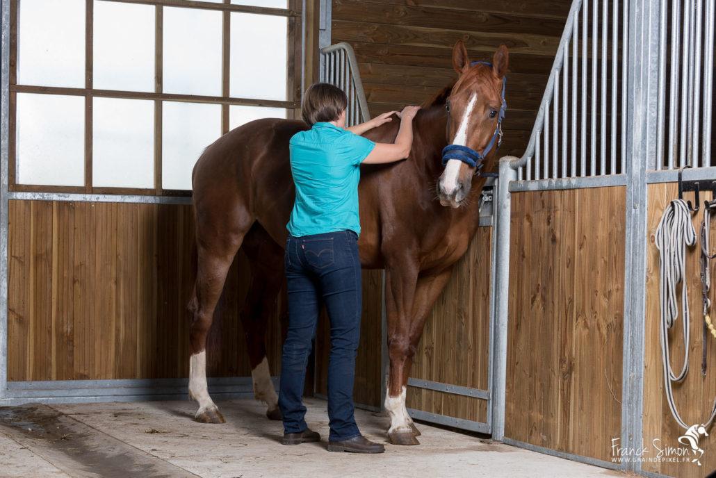 animolistic-osteopathe-chien-cheval-grain-de-pixel-photographe-equestre-animalier