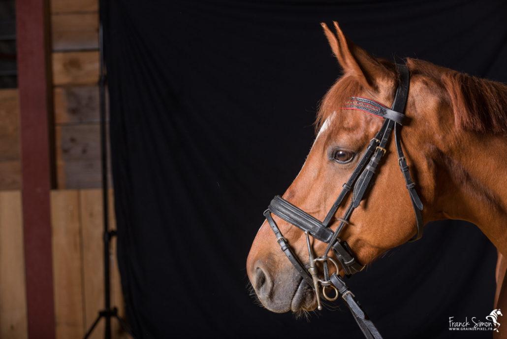 backstage-studio-equestre-garat-1-franck-simon-grain-de-pixel-photographe-equestre-16