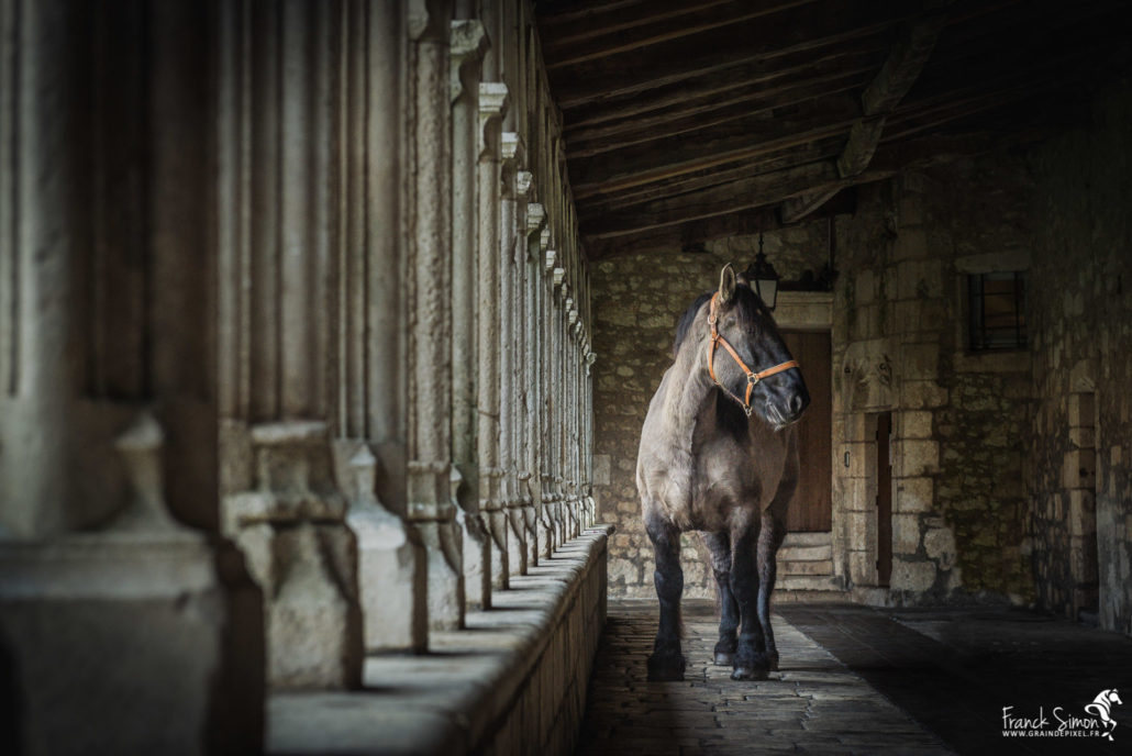 cloitre-couvent-carme-trait-poitevin-force-tranquille-série-photo-equestre-franck-simon-photographe-équestre-et-animalier-charente-1