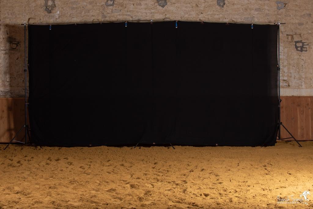 fond-studio-cheval-equites-grain-de-pixel-photographe-equestre