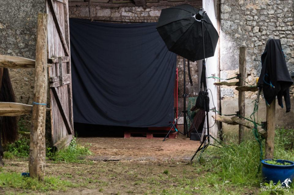 studio-équestre-grain-de-pixel-photographe-equestre-animalier-9