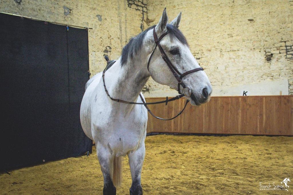 studio-cheval-equites-grain-de-pixel-photographe-equestre-12