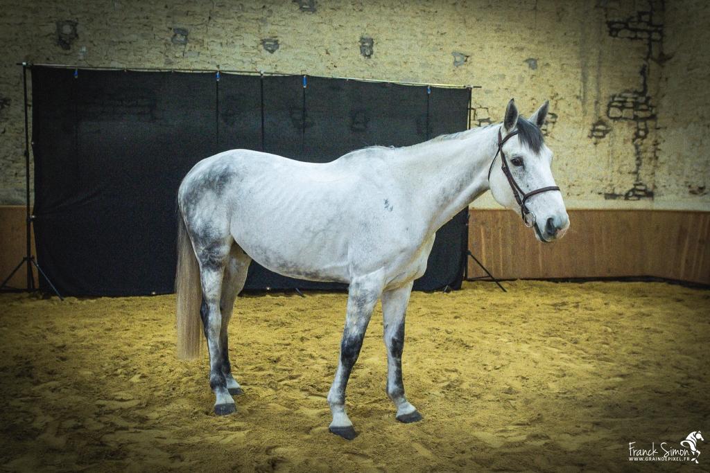 Comment gérer le cheval en photo studio ?