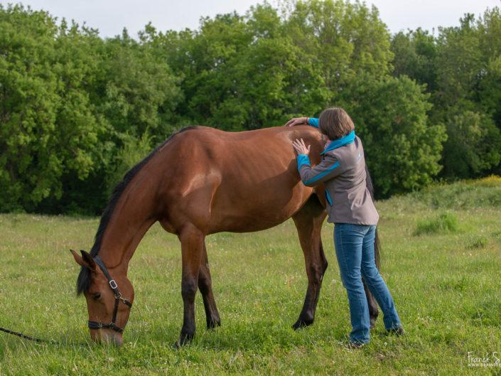 Animolistic-vétérinaires-ostéopathes-équestre-franck-simon-grain-de-pixel-photographe-charente-