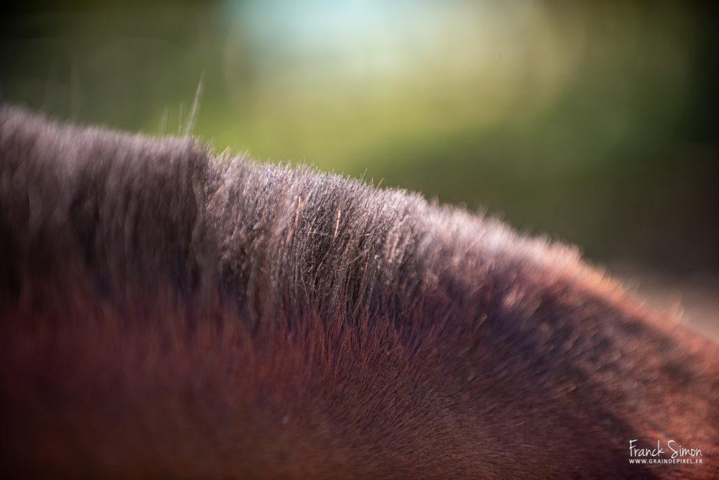 détails équestres-francjk-simon-photographe équestre-charente-angoulême-nouvelle-aquitaine