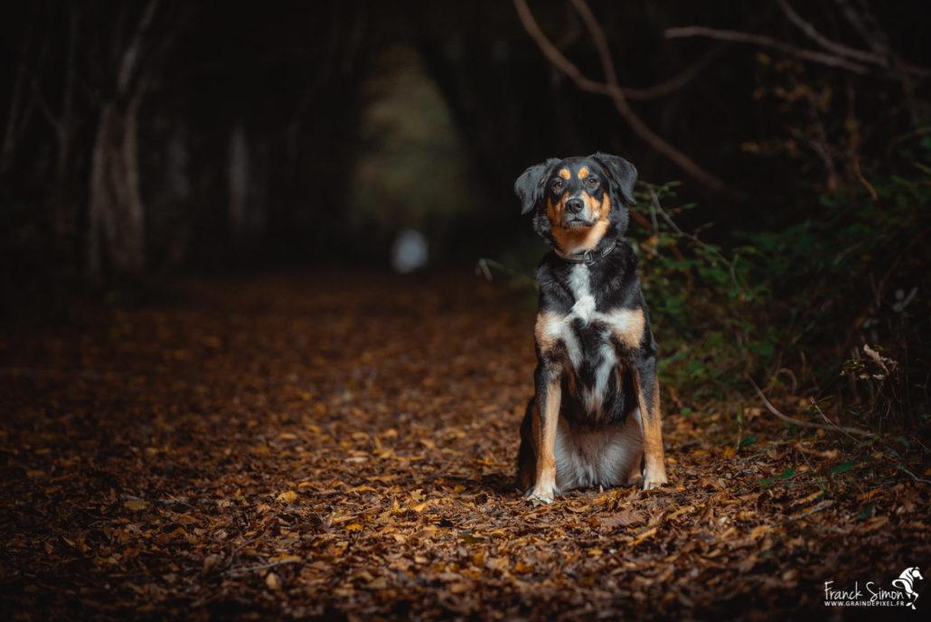 Nalia-spa-séance-photo-chien-franck-simon-photographe-équestre-et-animalier-charente-1
