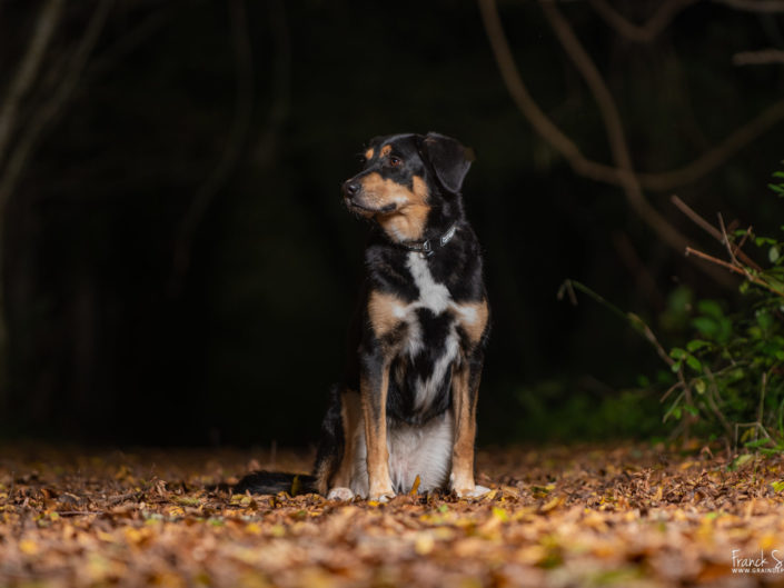 Nalia-spa-séance-photo-chien-franck-simon-photographe-équestre-et-animalier-charente-1