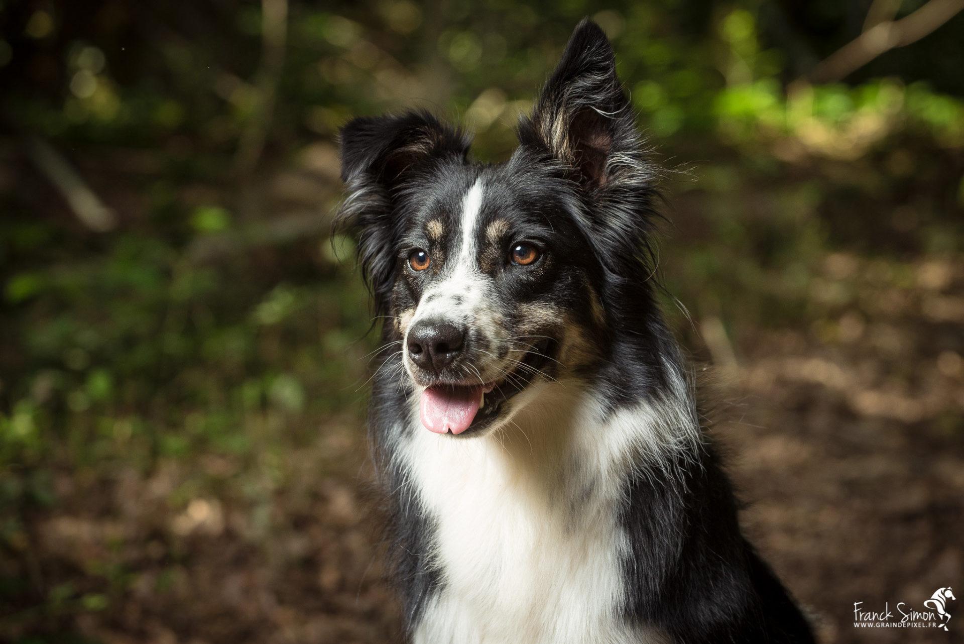 Nacy, Border Collie et chien d'écurie