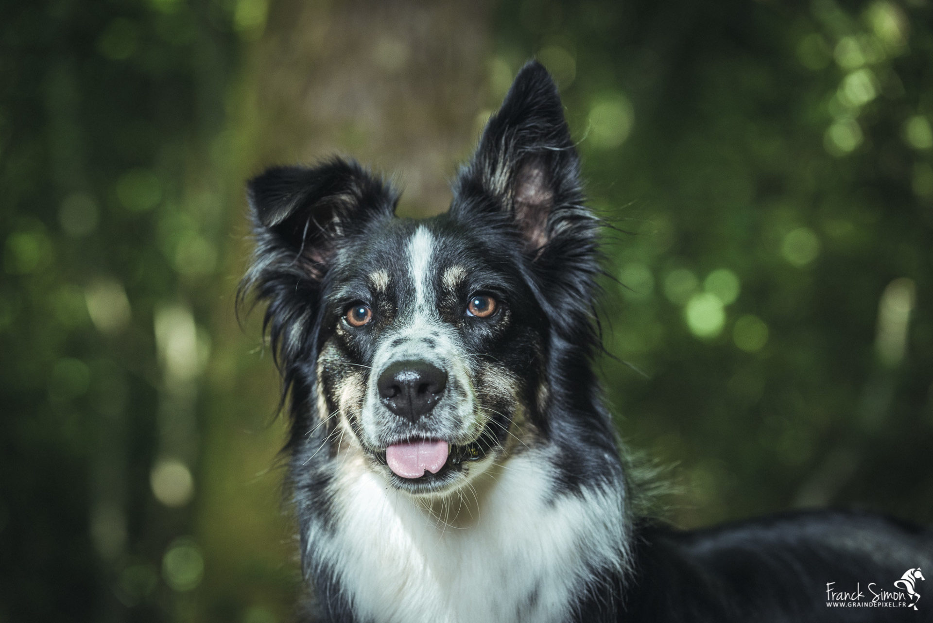 Nancy, Border-Collie