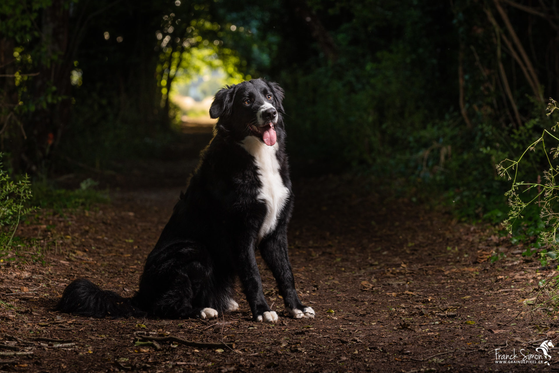 Oréo, Bouvier Bernois X Border Collie, chien de photographe