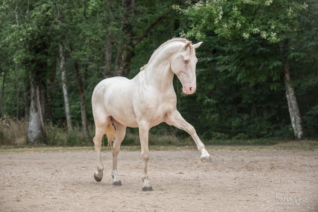 elevage-merlande-grain-de-pixel-photographe-equestre-et-animalier-1-3