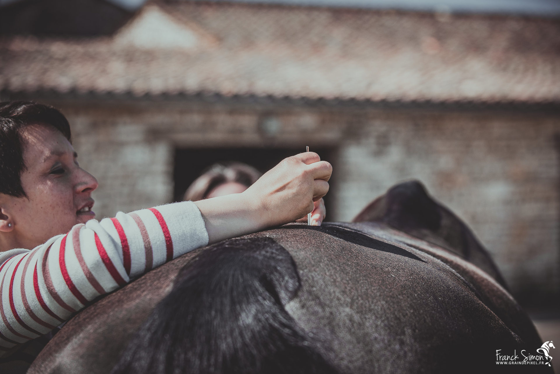 Animolistic - Acupuncture et chevaux