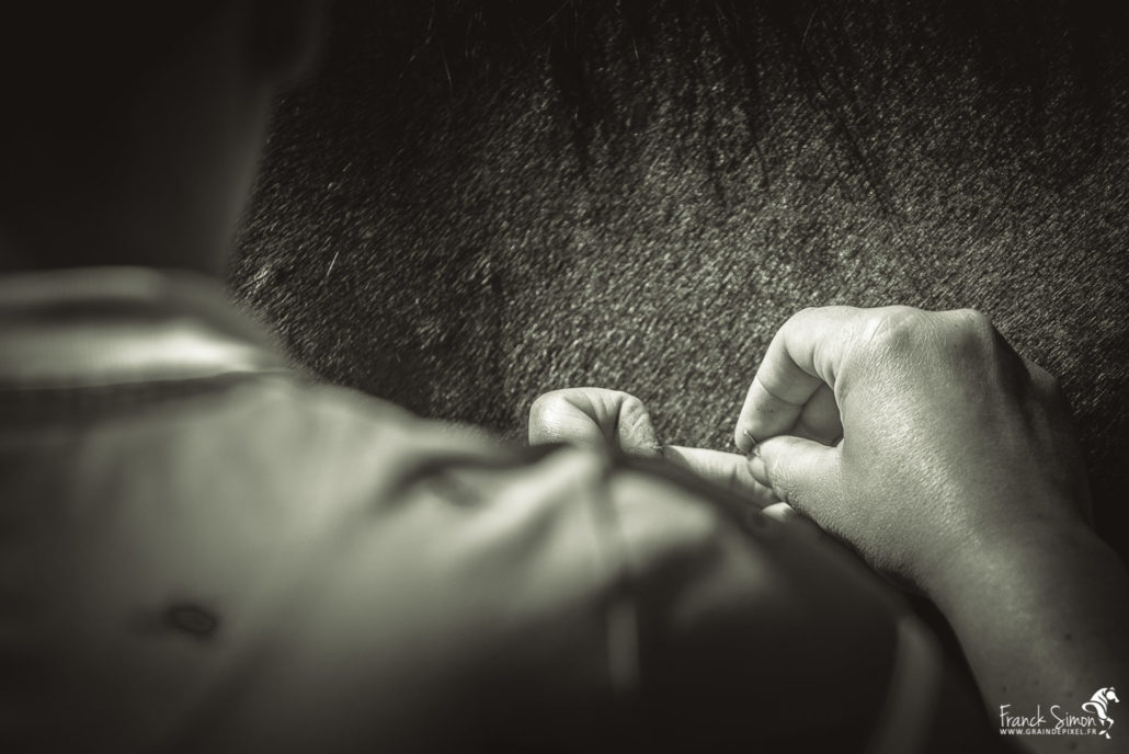 acupuncture-animolistic-franck-simon-grain-de-pixel-photographe-équestre-animalier-poitou-charente-2
