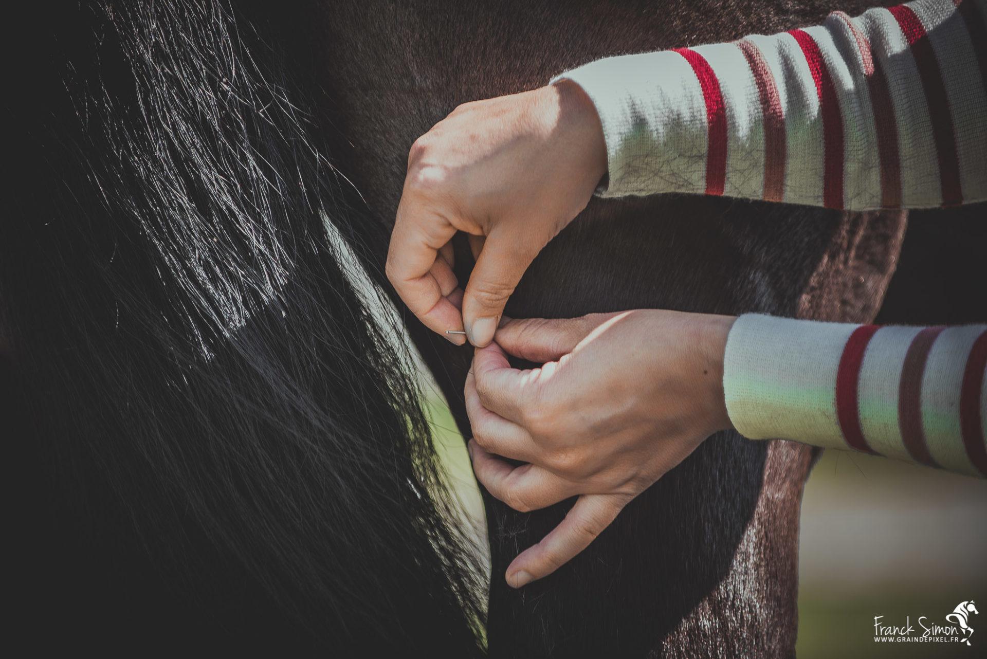 Acupuncture équine