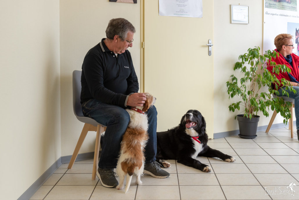cabinet-osteopathie-animolistic-franck-simon-photographe-equestre-et-animalier-1