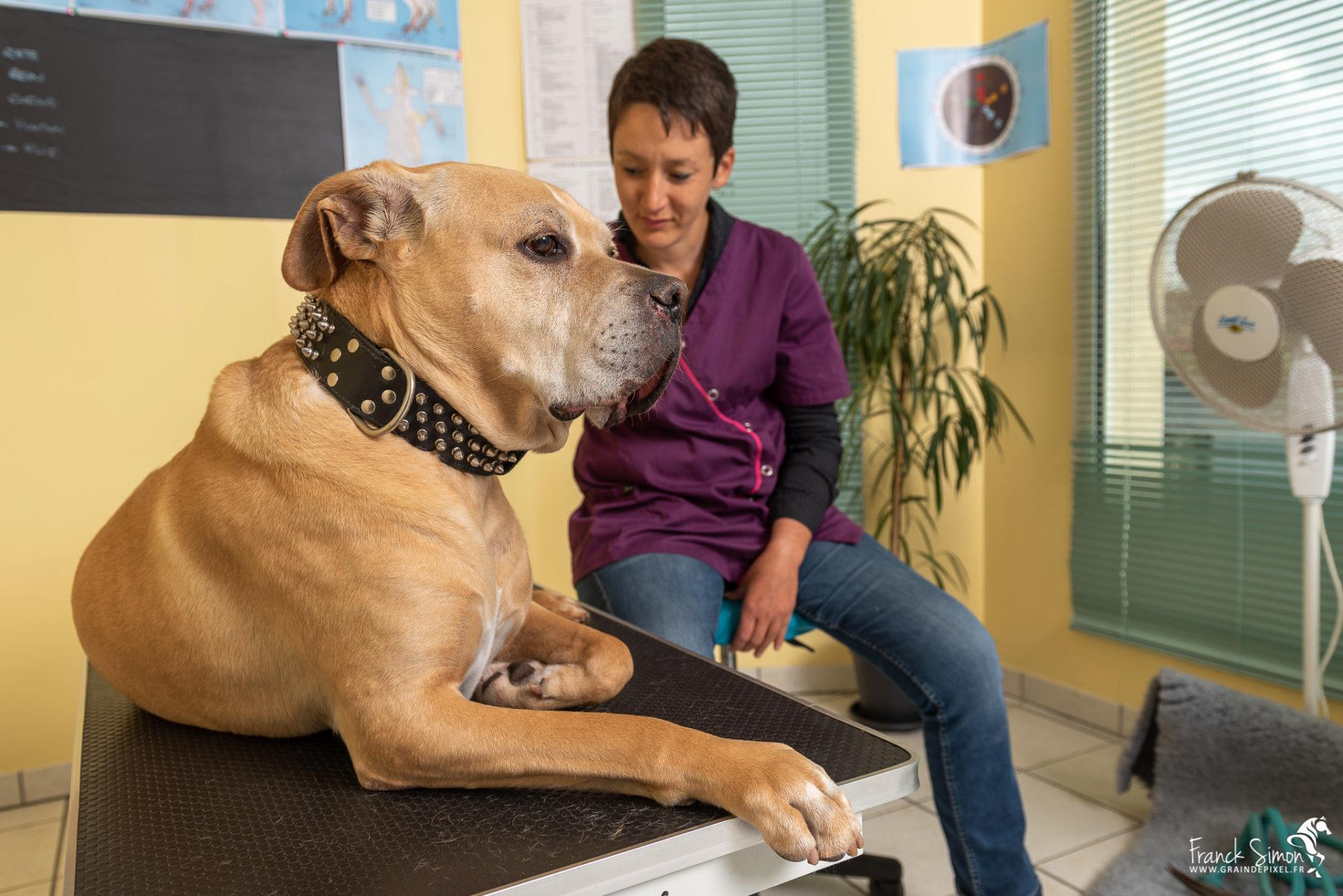 Animolistic, le cabinet d'ostéopathie animale