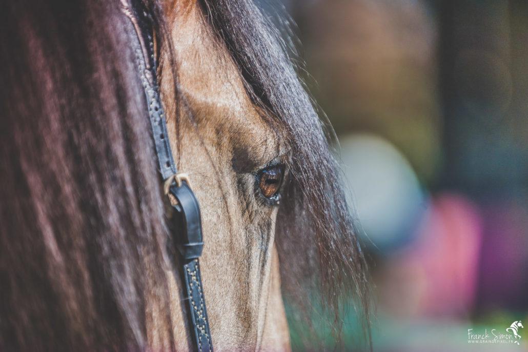 détail-regard-équestre-chevaux-franck-simon-grain-de-pixel-photographe-equestre-et-animalier-charente