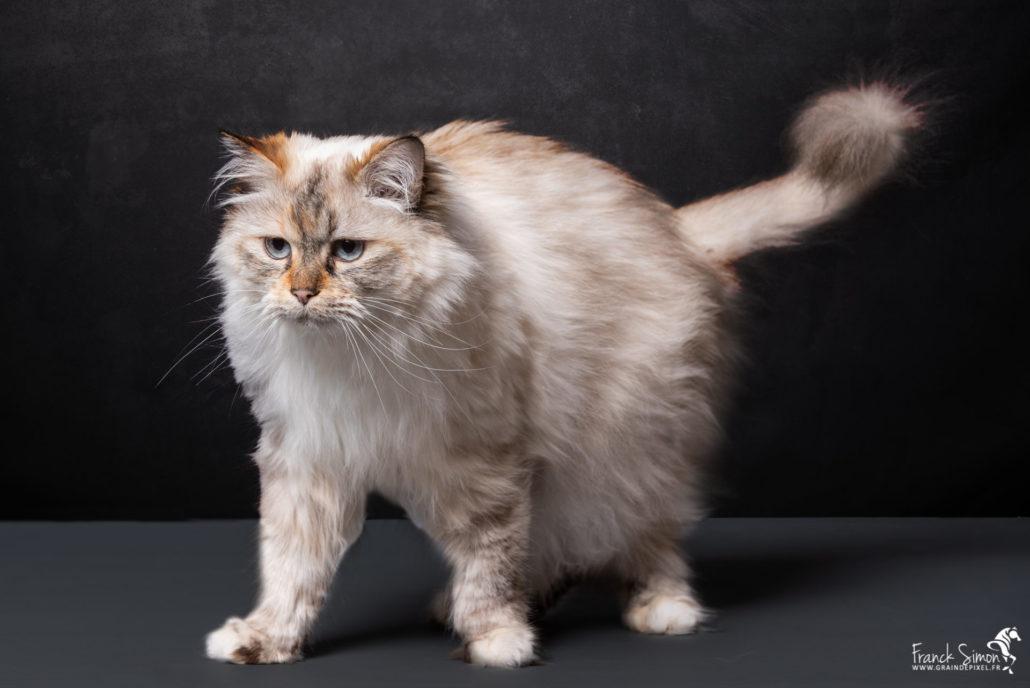 chien-chat-jardiland-grain-de-pixel-photographe-equestre-animalier-3