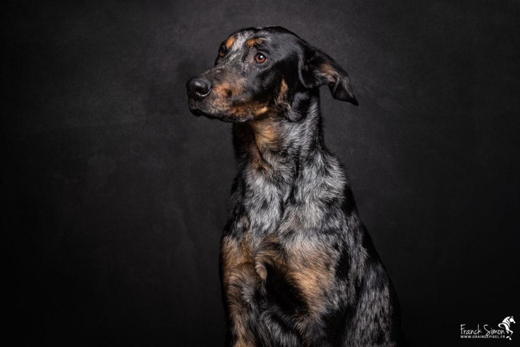 chien-chat-jardiland-grain-de-pixel-photographe-equestre-animalier-3-2