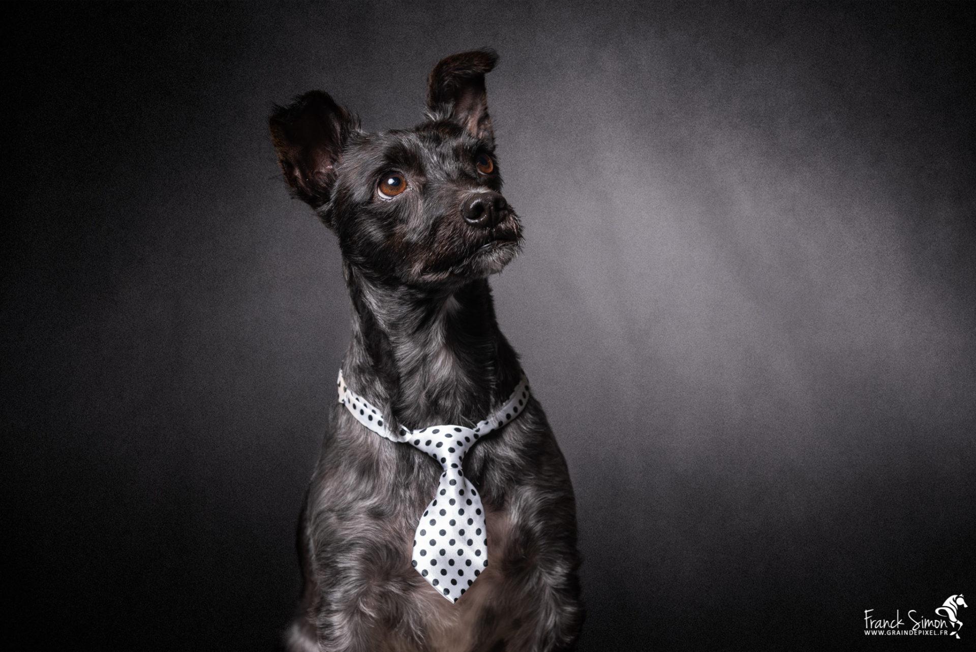 Photographier son chien : les conseils d'un photographe canin professionnel