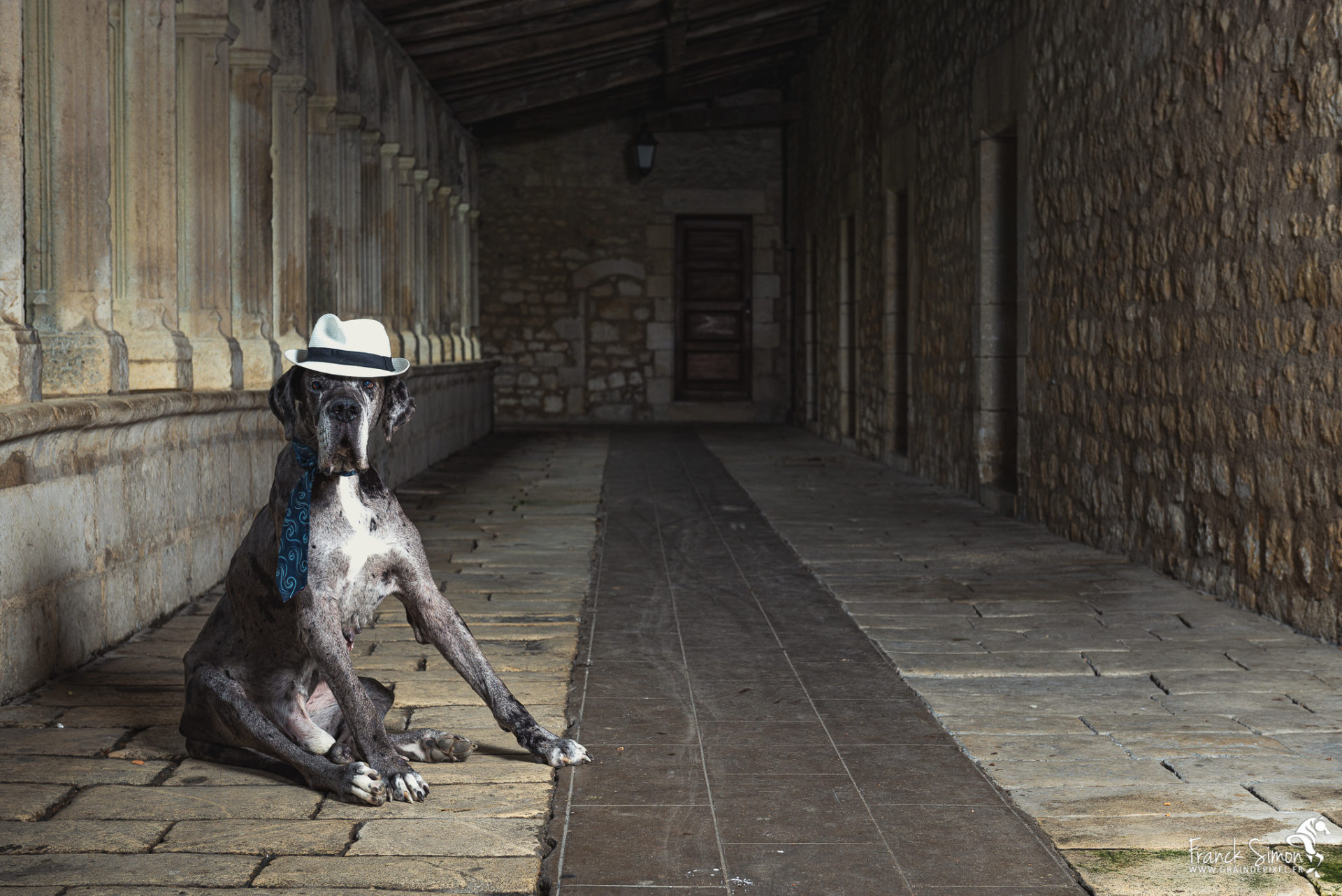 Jean Jean le Dogue Allemand