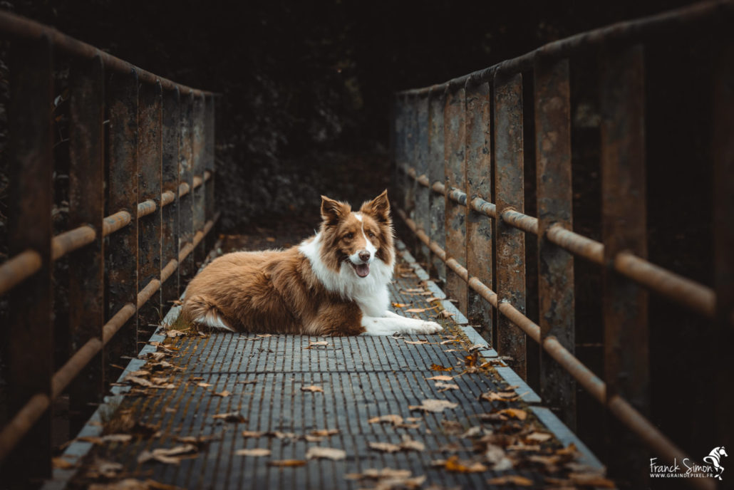 cindy-vikki-séance-cavalier-franck-simon-photographe-équestre-et-animalier-charente-78