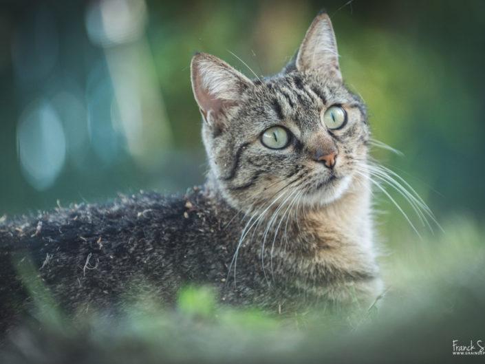 lili-chat-grain-de-pixel-photographe-equestre-animalier-1