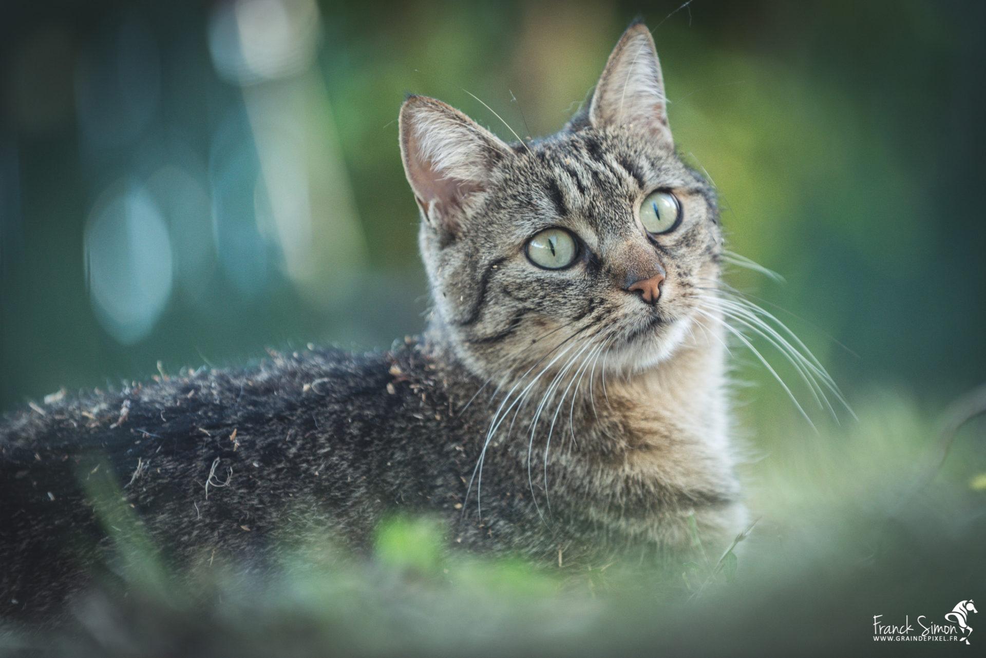 Lili la princesse chat