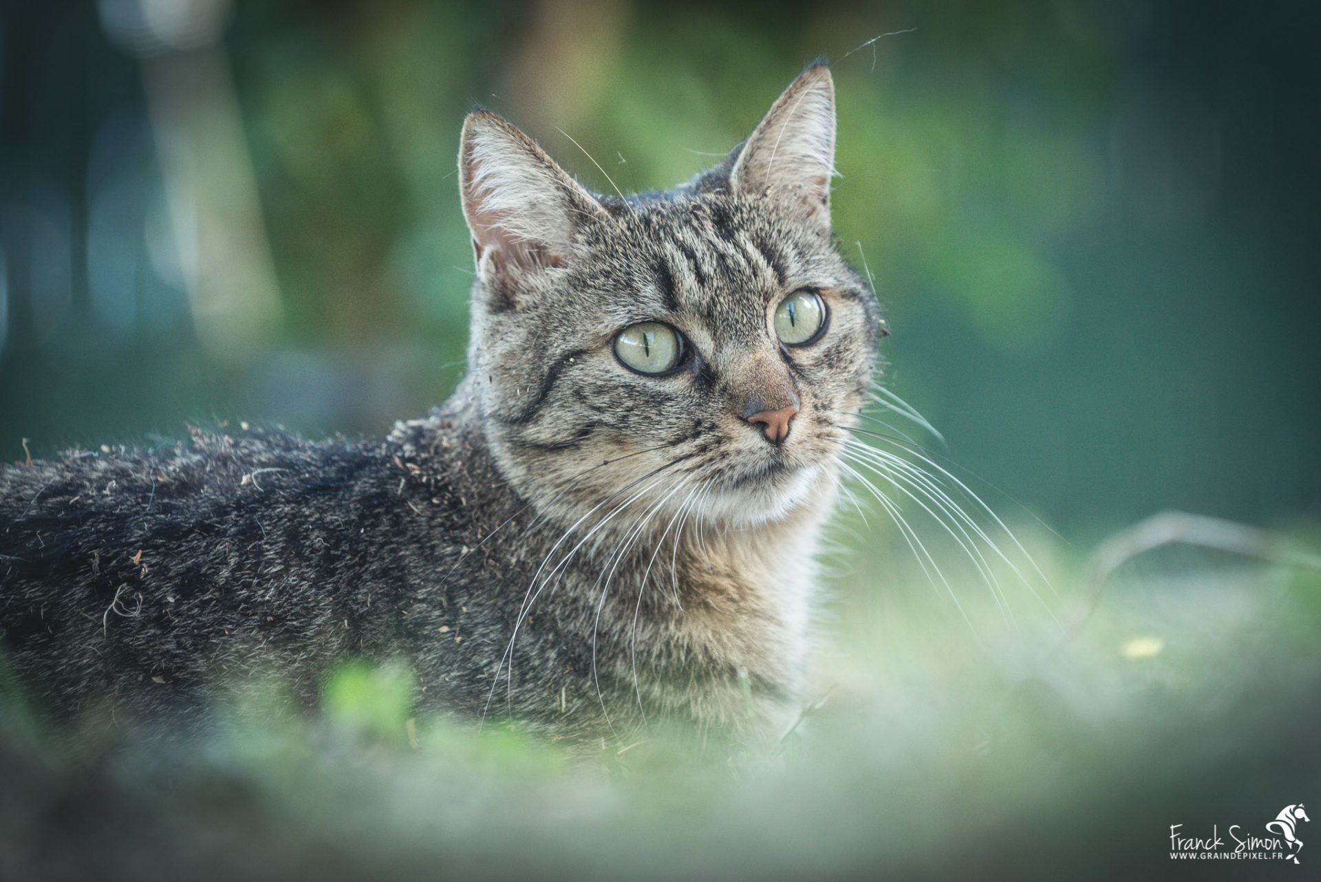 Lili, la princesse chat