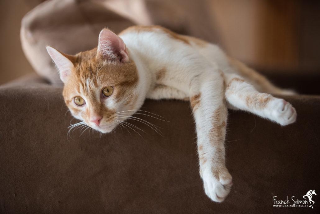 pistache-chat-grain-de-pixel-photographe-chien-chat-1