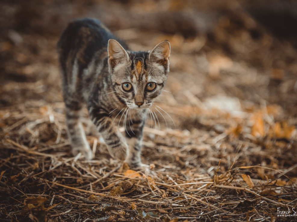 portrait-chat-ecurie-grand-guillon-grain-de-pixel-photographe-equestre-animalier