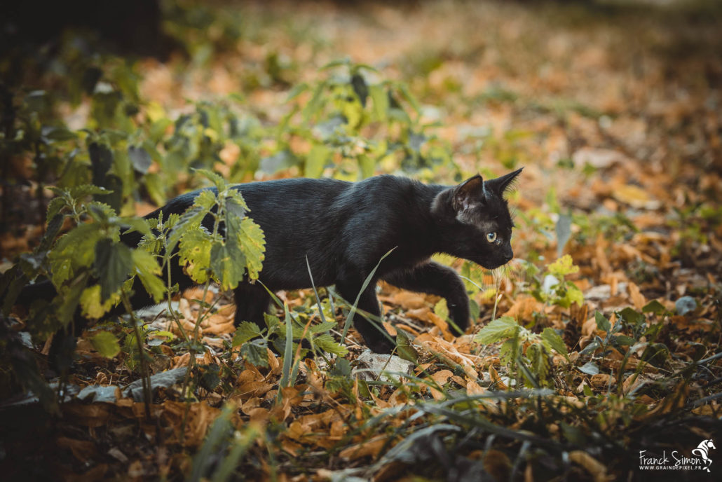 portrait-chat-ecurie-grand-guillon-grain-de-pixel-photographe-equestre-animalier
