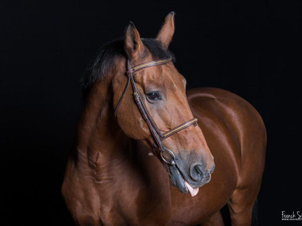 humour-cheval-équestre-photographie-grain-de-pixel-franck-simon-photographe-équin-animalier-3